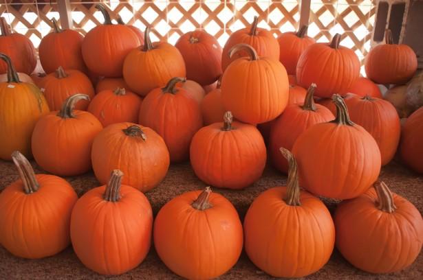 pumpkin recipes, bobotie recipe, mince recipes, autumn recipes